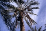 près d'El Oued